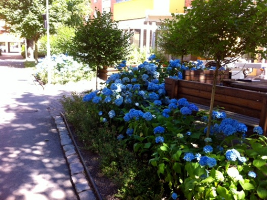 Blommande rabatter